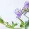 電子書籍「パリスタイルで花のある暮らし」のご感想を頂きました。