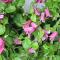 クレマチス(テッセン)は和洋両方で楽しめるお花です。