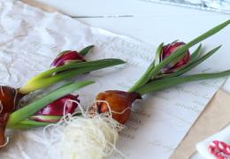チューリップの原種を使って2