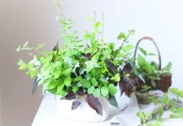 暑い季節には、グリーンの使い方がポイントです。