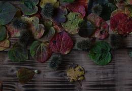 10月21日(月)14:00~ プリザーブドフラワーで仏花を作りませんか?