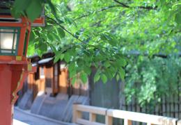 京都東山教室の周辺(祇園四条)を散歩しました。